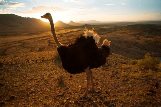 Ostrich in Addo Elephant National Park Day Tours Port Elizabeth