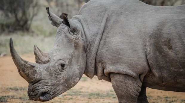White Rhino in Kragga Kamma game park game reserve guided tours and safari guided game drives in Port Elizabeth Private game reserve in Port Elizabeth Day visits