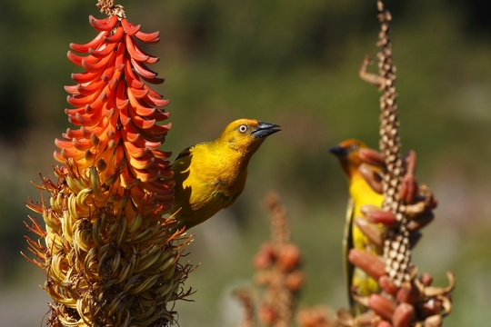 Birds in Addo Elephant National Park Day Tours Port Elizabeth