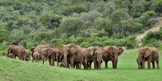 Addo Tours | Full Day Addo Elephant National Park Tour | Addo Safari